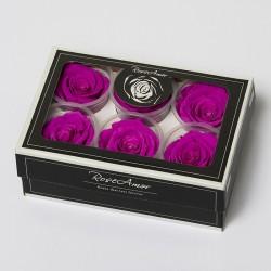 6 Rosen stabilisiert