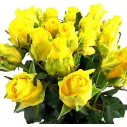 Gelbe Rosen 20 Stück
