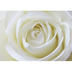 Karte Rose
