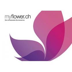 Karte myflower